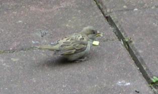 vogels eten brood